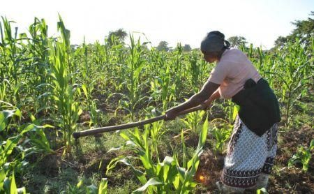 uk-supports-mozambique-s-agriculture-sector-with-40mln