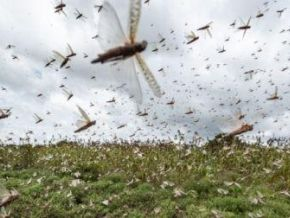 eu-grants-additional-15mln-to-fight-locusts-in-east-africa