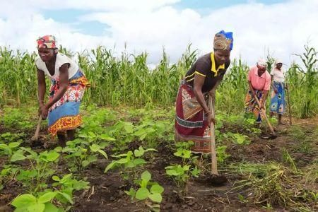small-farmers-supply-one-third-of-the-global-agricultural-output-fao