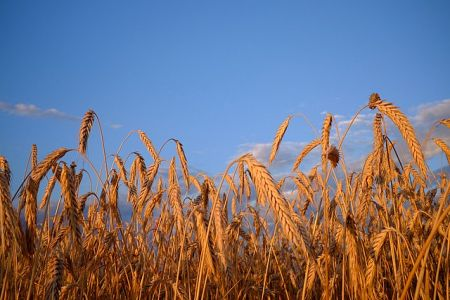 nigeria-s-wheat-importation-for-q1-2021-valued-at-625-million
