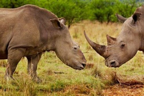 Malawi's govt jails seven Chinese for poaching