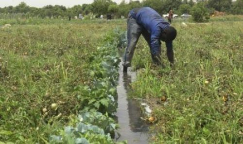 Expertise France calls for projects to make agriculture more resilient in West Africa