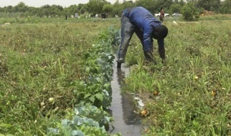 expertise-france-calls-for-projects-to-make-agriculture-more-resilient-in-west-africa