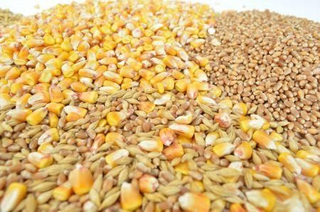 zimbabwean-government-says-it-will-keep-subsidizing-grain-next-year