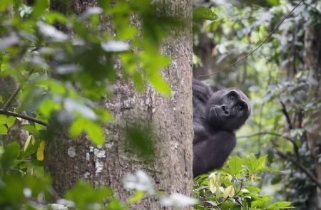 post-covid-19-positioning-africa-ecotourism-for-gabon-s-diversification-strategy