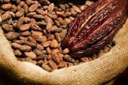 ghana-cocoa-board-african-development-bank-and-partners-celebrate-first-200-million-disbursement-of-loan-to-boost-cocoa-productivity