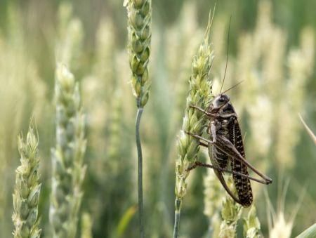 money-needed-to-fight-locusts-in-east-africa-has-doubled-to-138mln-fao
