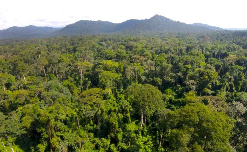 African Development Bank Reiterates Support for Protection of Congo Basin Forest
