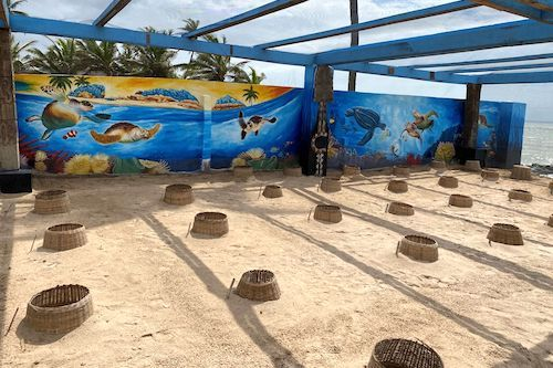 Bolloré Ports committed to sea turtle conservation
