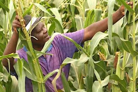 zimbabwe-a-farmer-harvests-success-in-refugee-camp
