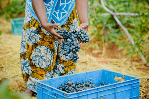Development banks and partners pledge $17 billion in financing to improve food security in Africa