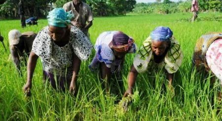 cote-d-ivoire-sa-s-global-africa-integrated-farm-approves-167-mln-for-an-integrated-agricultural-program
