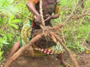 cote-d-ivoire-achieved-105-food-self-sufficiency-rate-in-2014-17