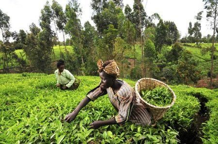 ifad-grants-eswatini-9mln-for-small-producers-financial-inclusion
