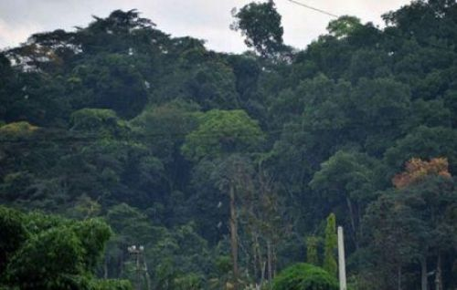 Côte d'Ivoire wants to increase plant cover to 20% by 2040, from current 11%