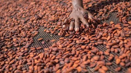 cote-d-ivoire-in-talks-with-eu-for-1bln-cocoa-loan