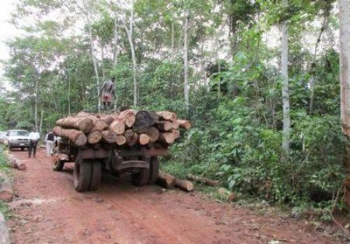 Canadian FinDev injects $12mln in Miro Forestry Developments