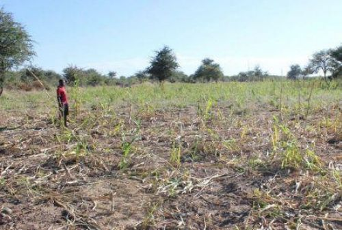 Zimbabwean govt ready to give lands back to white farmers
