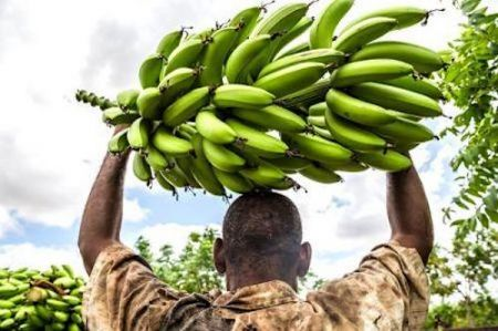 faced-with-rising-global-costs-let-s-continue-to-build-together-a-fair-and-sustainable-banana-value-chain-afruibana